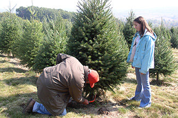 Photo courtesy of Kohl's Stony Hill Tree Farm.
