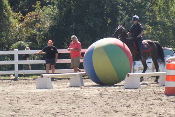 Most of the horses seemed to enjoy pushing the big beach ball, which simulates pushing a crowd back.