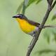 Photo courtesy Sean McCandless A Scrub nesting bird.