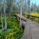 Boardwalk at Magnolia Gardens