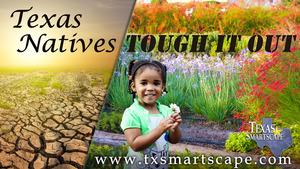 Medium texas natives girl sm 202015