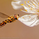 Pollen...Need Pollen by Phil Shoffner, 1st place, Adult Intermediate, Wildlife