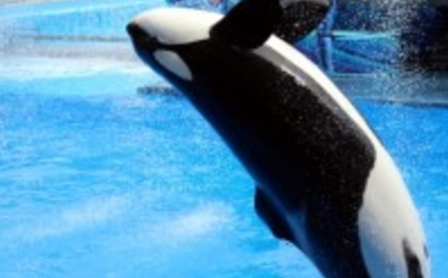 "Sea World's new show ""One Ocean"" is sure to please the whole family."