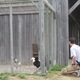 Visitors look at chickens in one of the large enclosures.