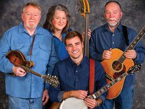 Medium bluegrass