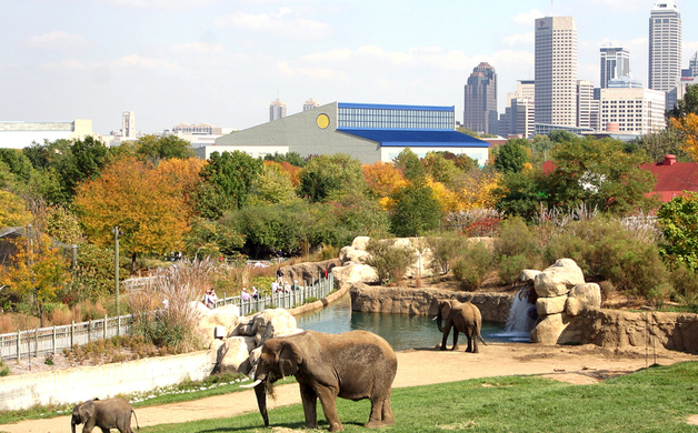 Elephants with Skyline-Tim Littig