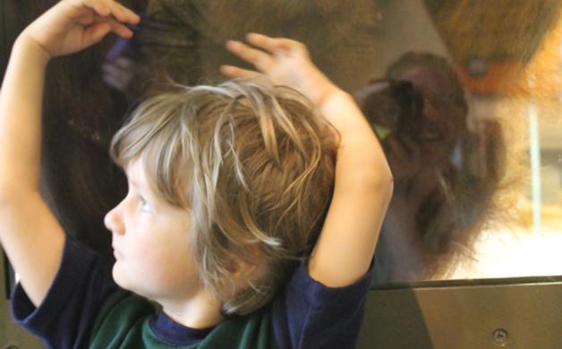 Quinn and Orangutan at Indianapolis Zoo