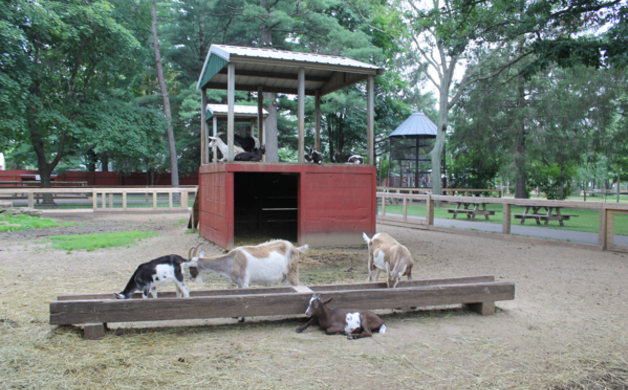 Goats at Wisconsin Deer Park