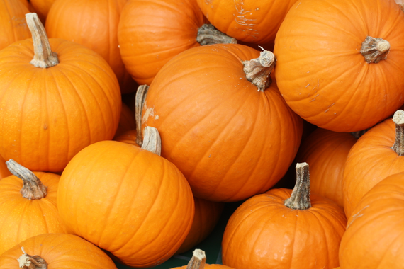 Bake these  pumpkins in toronto