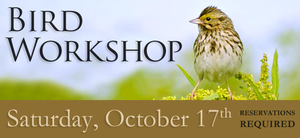 Medium birding 20workshop