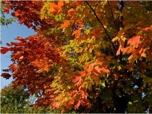 Medium leavesthreerivers