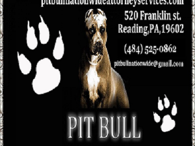 Pitbullbizcardcompleteside122223