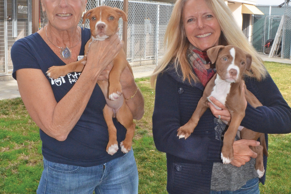 Volunteer Sandra Ackerman and Shelter Manager Kim Cholodenko with Penny & Dottie.