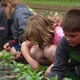 Cedar Circle Farm Summer Day Camp - start Jul 11 2016 0900AM