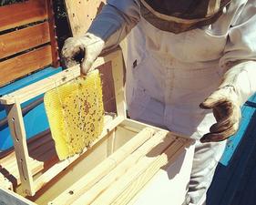 Medium beekeeping