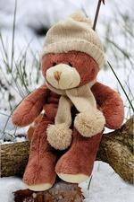 Medium teddy