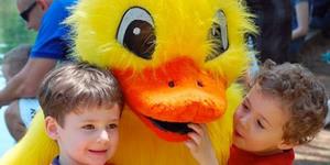 Medium duck1n