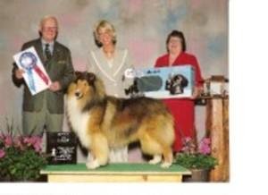 Medium dog show