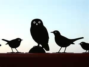Medium birds