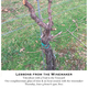 Thumb viticulture june 209