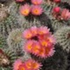 Medium thumb cactus 20for 20mothers 20day 20rotated 5b1 5d