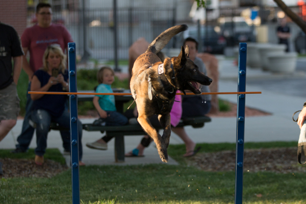 K-9 Joker goes over the bar jump (Photo: Sarah Knight Photography)