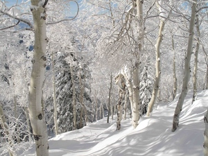 Medium winterpic