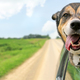 How a Microchip Can Keep Your Pet Safe this Summer - Jun 30 2016 0857AM