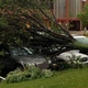 A large tree fell on cars near businesses off of Elm Creek Parkway during the July 5 2016 storm in Maple Grove Photo by Doug Erlien