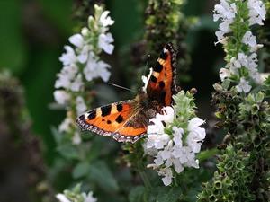Medium butterfly 199115 960 720
