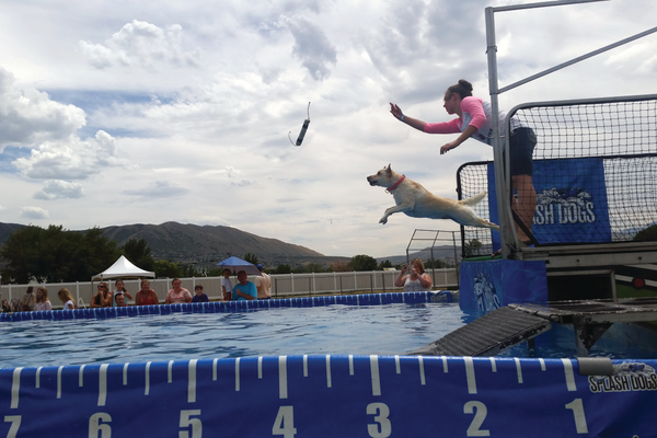 Sundance leaps into the pool under the direction of her owner Breda Darrington. —Kelly Cannon