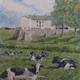 'Summer at Hillhurst Farm.'