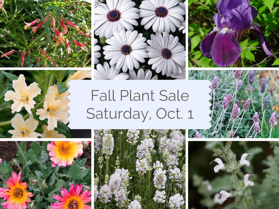 Fall plant salesaturday oct. 1