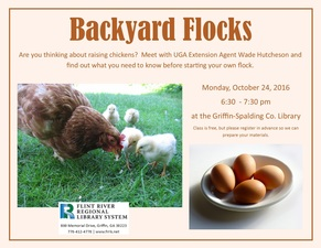 Medium backyard 20flocks