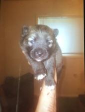 Medium puppy 20fraud 20dog