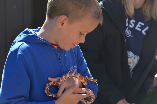 Vacationing nine-year-old Spencer Jenkins gazes on a mountain king snake wrapping itself around his arm.