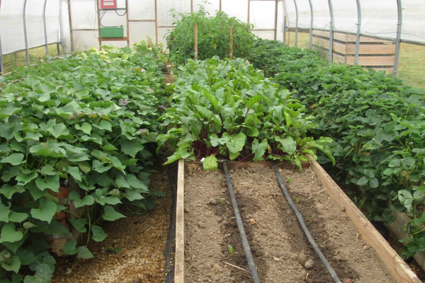 A greenhouse at Patton provides year-round growing opportunities.