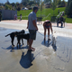 Dogs cool down in the splash pad. This was the only time of the year the splash pad was open to dogs. (Kelly Cannon/City Journals)