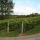 Vermont Wineries