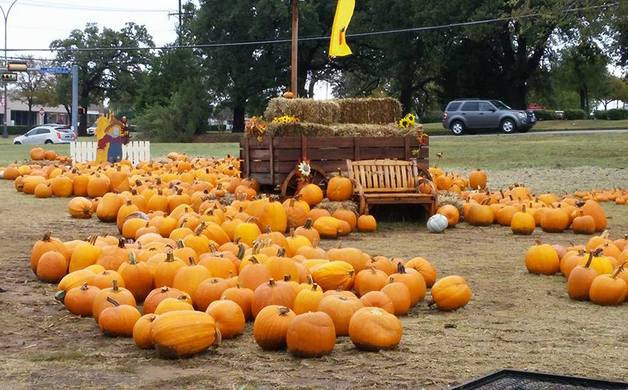 2016 mansfield-area pumpkin patch & fall events guide | mansfield.