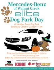 Medium dog park day