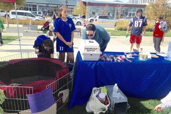 Pets could be adopted at the canine event.  (Mylinda LeGrande/ City Journals)