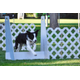 Zuni, a border collie, jumps over a hurdle during a Thunder Paws practice. (Nikelle Perkins/Thunder Paws)