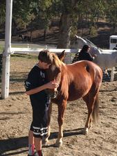Medium 17 20boyw horse  20page 201