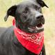 Meet Bear, one of the most recent adoptions at Mansfield Animal Care & Control.