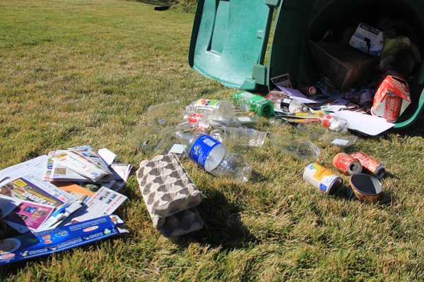 There are plenty of products that can be recycling in curbside bins, including plastics, aluminum and mixed papers.