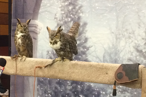 "Two owls on display at the ""Magical Creatures"" booth at the Yule Ball. (Marina McTee/City Journals)"