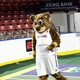 Buster, the Salt Lake Stars mascot and cousin to Jazz Bear, was on hand at the ChamberWest annual awards gala. (Travis Barton/City Journals)