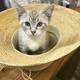 """Karen's cat, Alex: """"Adoption Day - Alex sat in my hat while we filled out all the paperwork - they take adoption VERY seriously."""""""