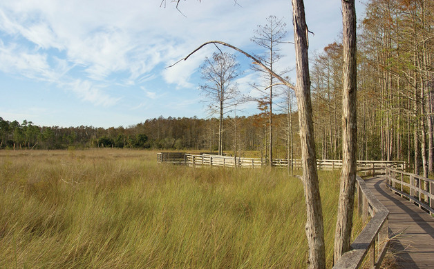 Corkscrew Swamp Sanctuary Boardwalk Horseshoe Marsh_RJ Wiley